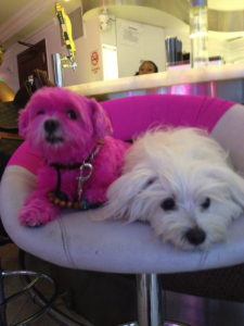 matching the dogs to the chairs! Coincidence?