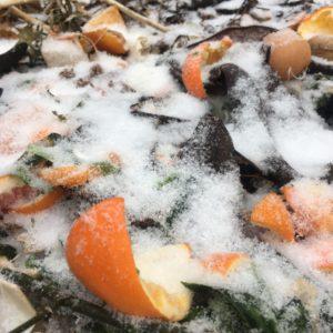 Circle of Life via oranges in compost