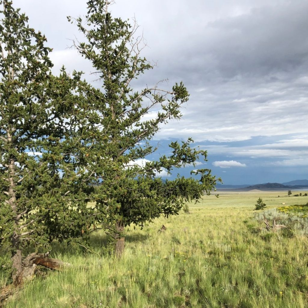 View of plot of land in Colorado valley with green grasses and spikey evergreens and mountains in the background