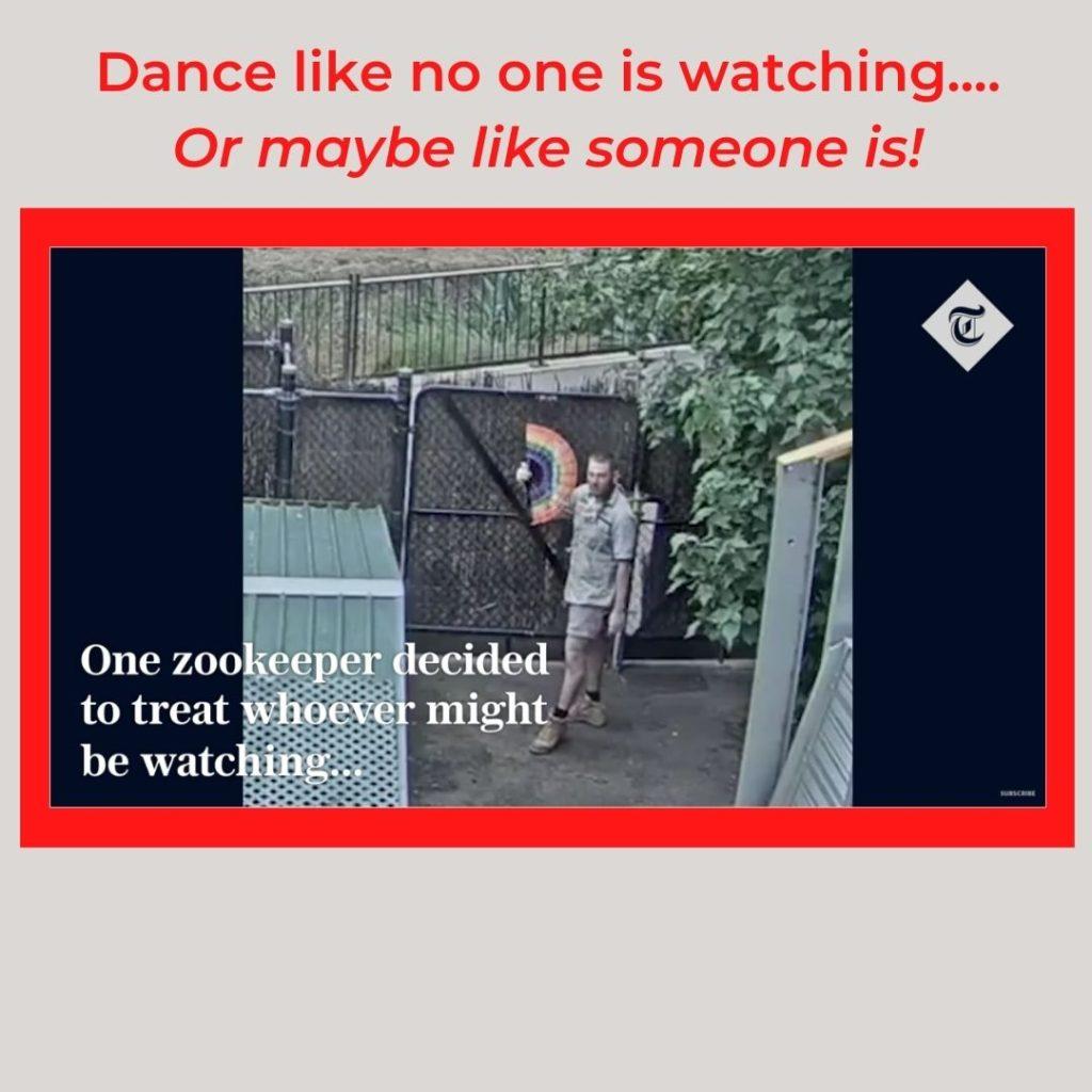 video shot of Australian Zoo Keeper Dancing