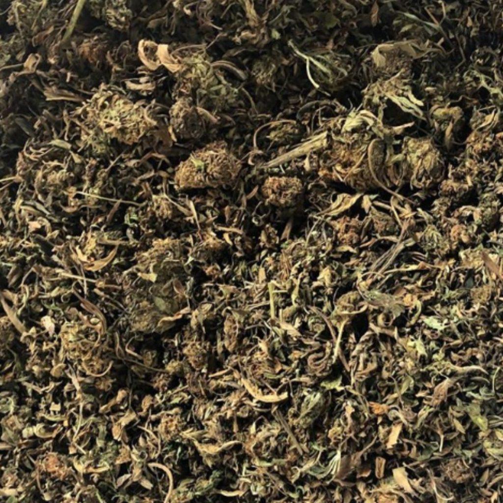 closeup of hemp bud