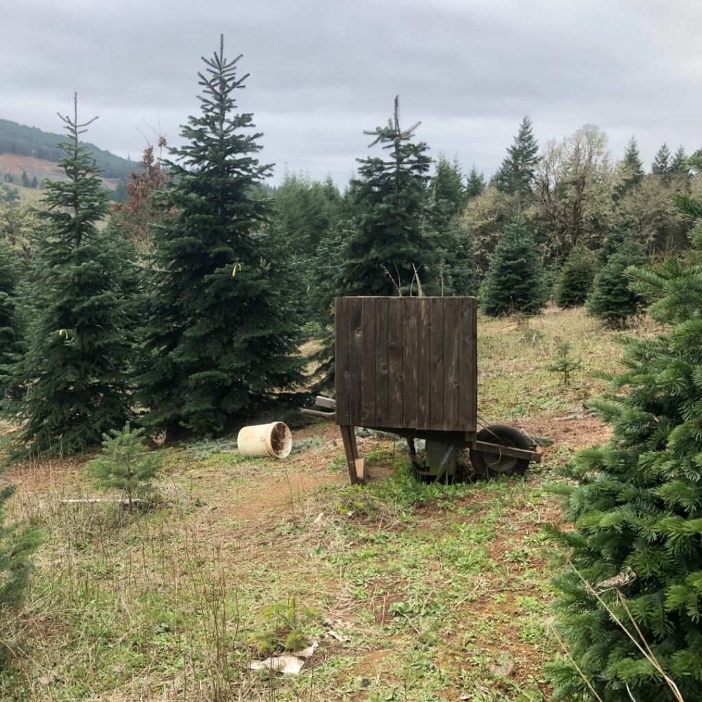 outhouse made from old wheel barrel on the mountainside
