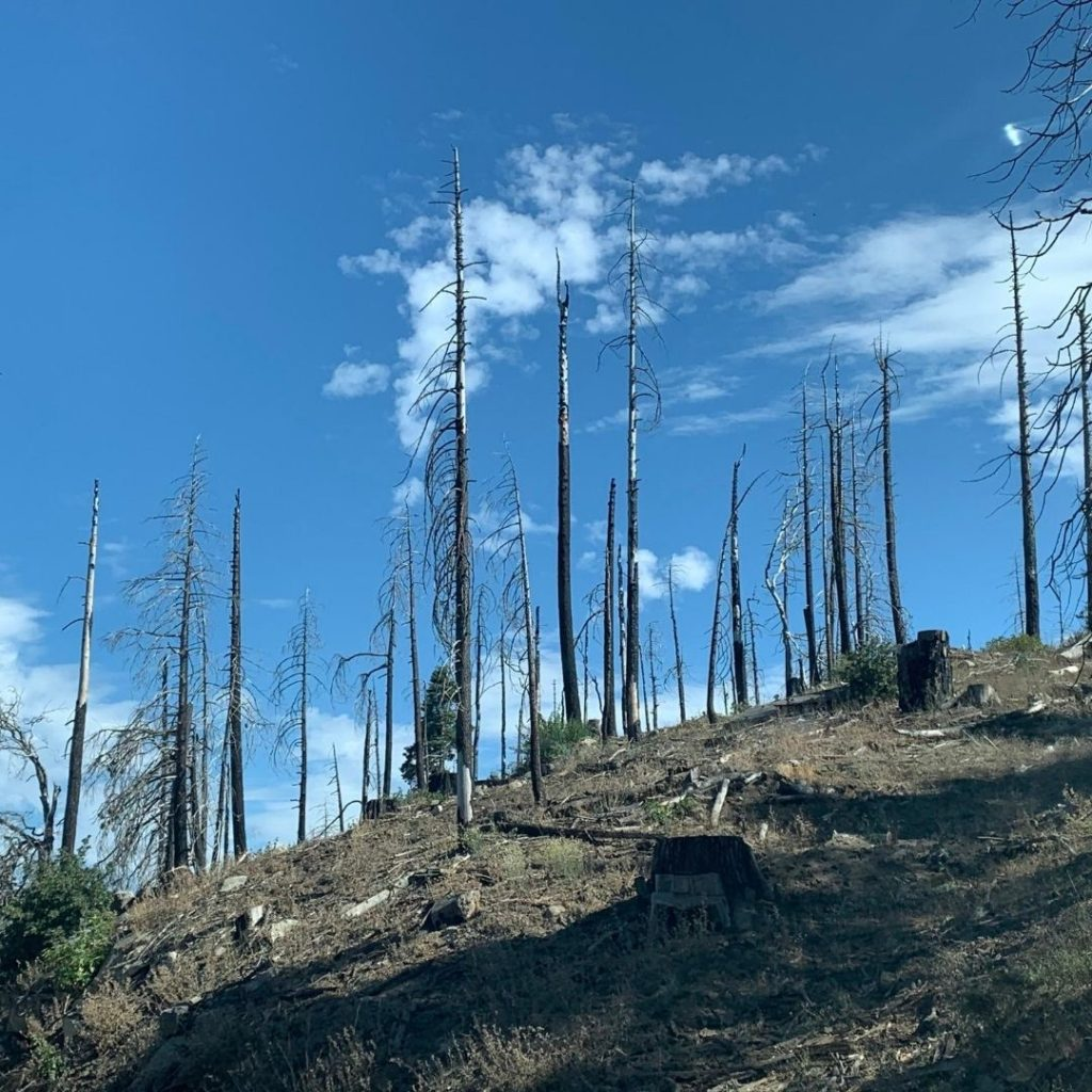 burned forest on mountainside inspired another daily haiku