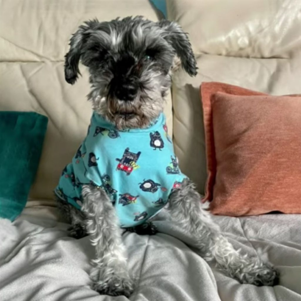 Pluto the dog in pjs