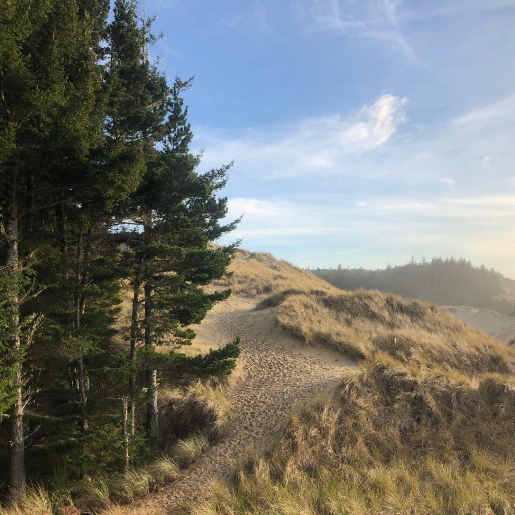 Dunes next to pine trees