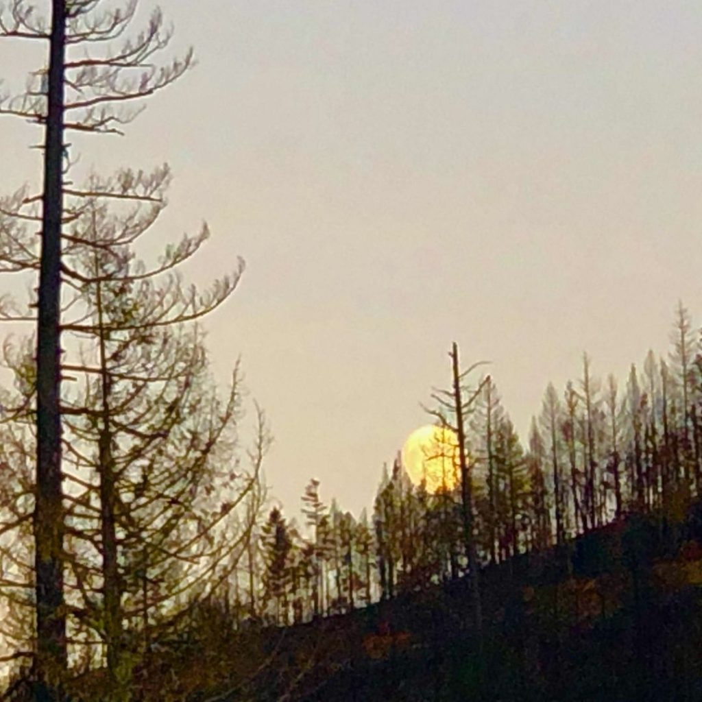 Burnt forest and full moon, Gasquet CA