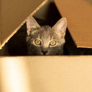 Curious kitten peeking out of box